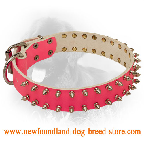 Spiked Leather Newfoundland Collar for Female Dogs