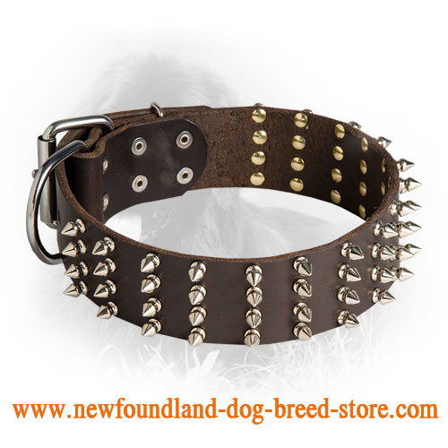 2 Inch Leather Newfoundland Collar with 4 Rows of Spikes