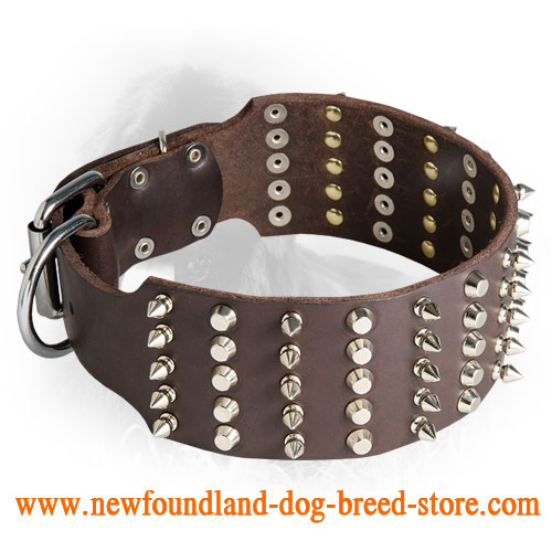 3 Inch Leather Newfoundland Collar with Spikes and Studs