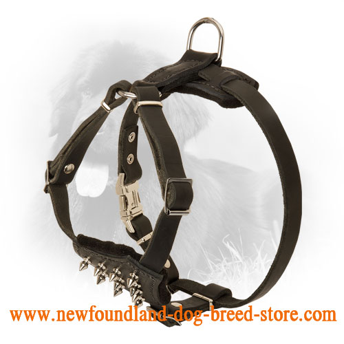 Puppy Size Leather Newfoundland Harness with Spikes