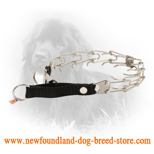 Stainless Steel Newfoundland Pinch Collar with Click Lock System