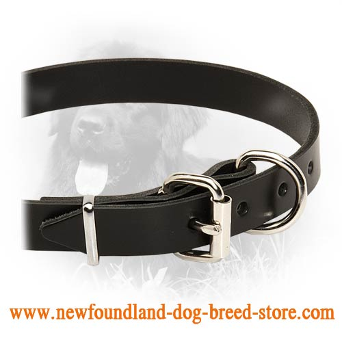 Newfy Favoirite Leather Dog Collar