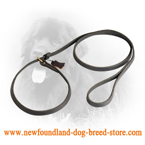 Practicable Leather Newfoundland Leash and Choke Collar Combo