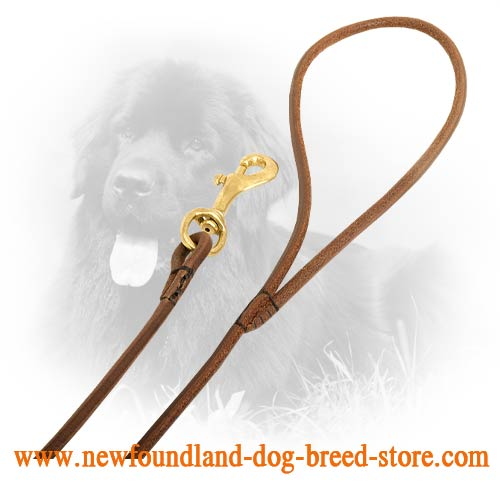 Snap Hook on Newfoundland Leash