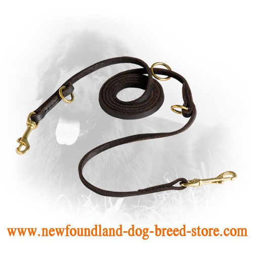 Newfoundland Leash for Many Activities