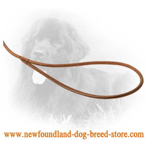 Durable Handle on Newfoundland Leash