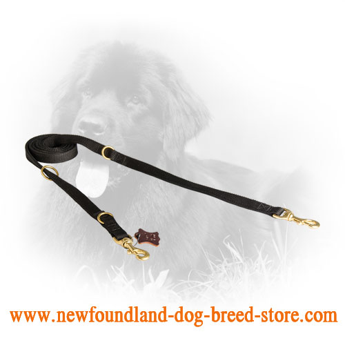 Newfoundland Leash for Different Dog Activities