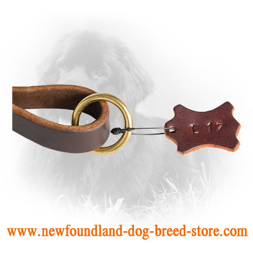 Solid Brass O-Ring on Newfoundland Leash