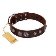 """Choco Brownie"" FDT Artisan Brown Leather Newfoundland Collar Adorned with Silver-Like Conchos"