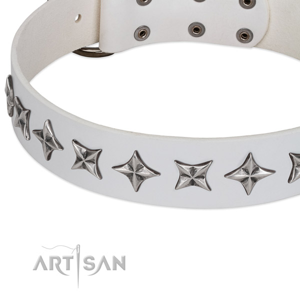Daily walking adorned dog collar of finest quality leather
