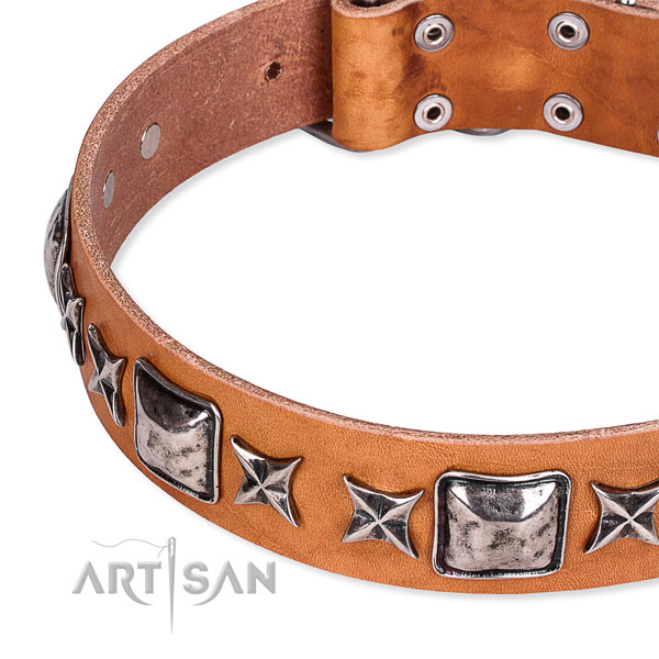 Everyday walking studded dog collar of top quality full grain leather