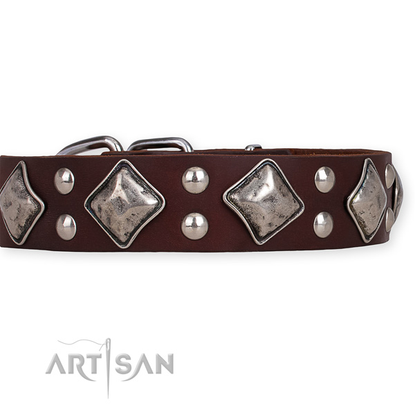 Genuine leather dog collar with awesome corrosion proof adornments