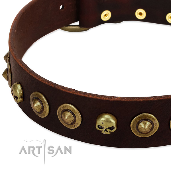 Fashionable embellishments on full grain leather collar for your four-legged friend