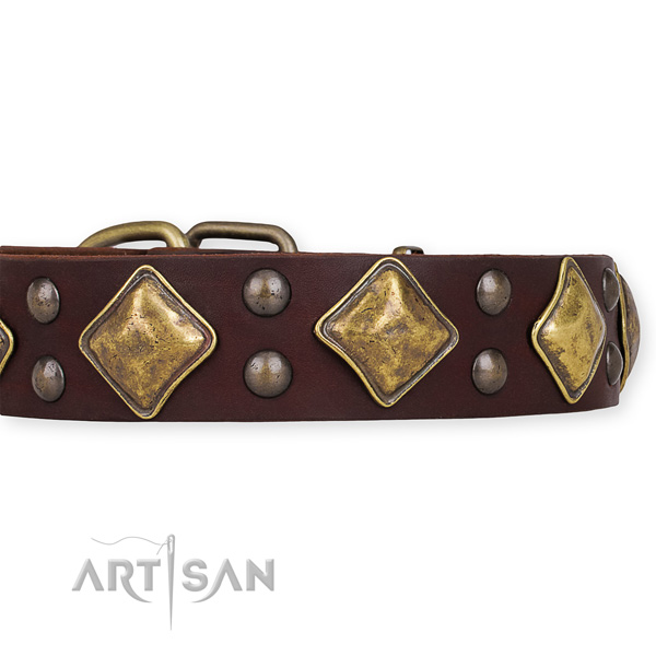 Genuine leather dog collar with impressive corrosion proof adornments