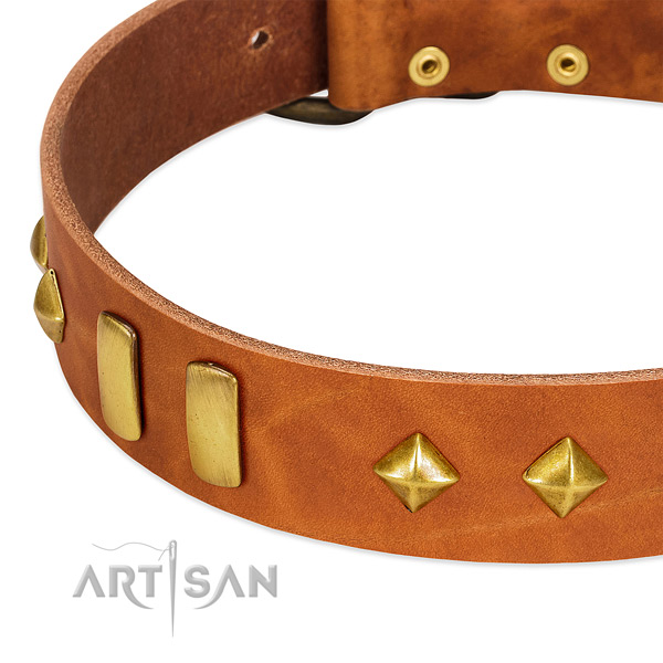 Daily use leather dog collar with trendy embellishments