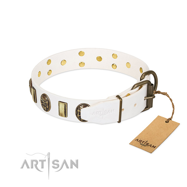 Strong traditional buckle on genuine leather collar for everyday walking your four-legged friend