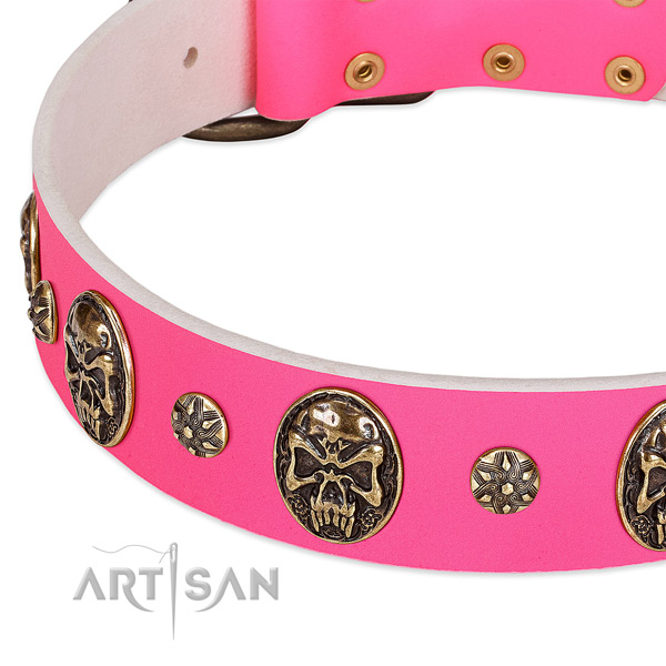 Unusual dog collar made for your stylish dog