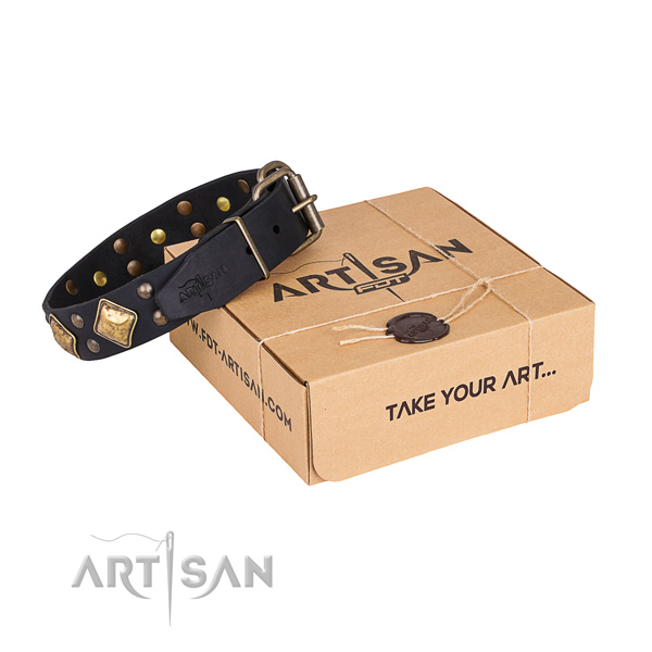 Basic training dog collar with Stylish corrosion proof studs