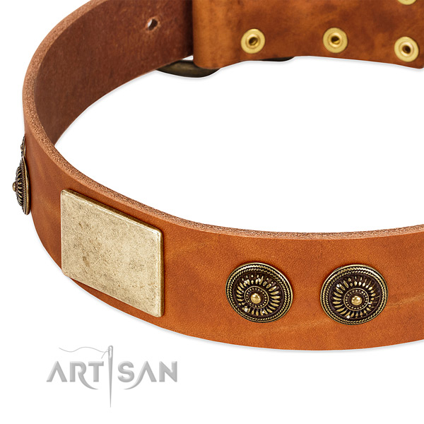 Inimitable dog collar crafted for your handsome doggie
