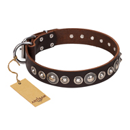 """Step and Sparkle"" FDT Artisan Glamorous Studded Brown Leather Newfoundland Collar"
