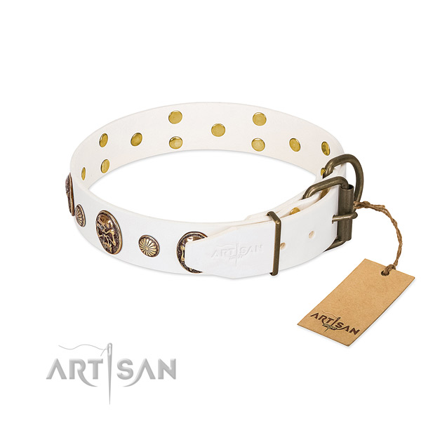 Corrosion proof buckle on full grain natural leather collar for walking your pet