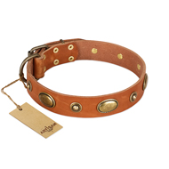 """Visual Magic"" FDT Artisan Tan Leather Newfoundland Collar for Daily Activities"