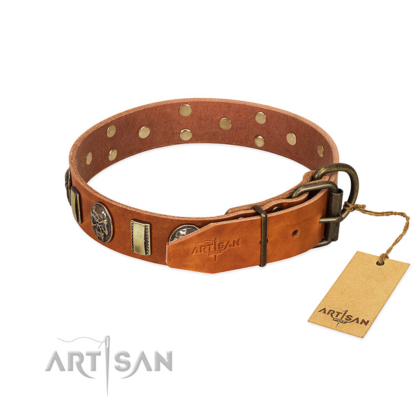 Rust-proof traditional buckle on leather collar for everyday walking your dog