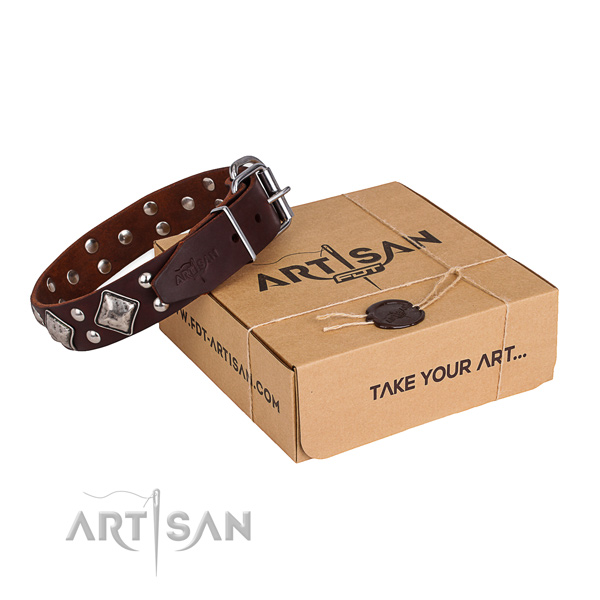 Walking dog collar with Top notch rust-proof embellishments