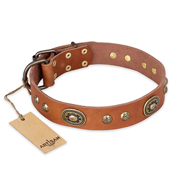 """Stunning Dress"" FDT Artisan Tan Leather Newfoundland Collar with Old Bronze Look Plates and Studs"