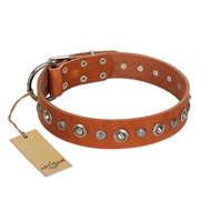 """Gorgeous Roundie"" FDT Artisan Tan Leather Newfoundland Collar with Chrome-plated Circles"