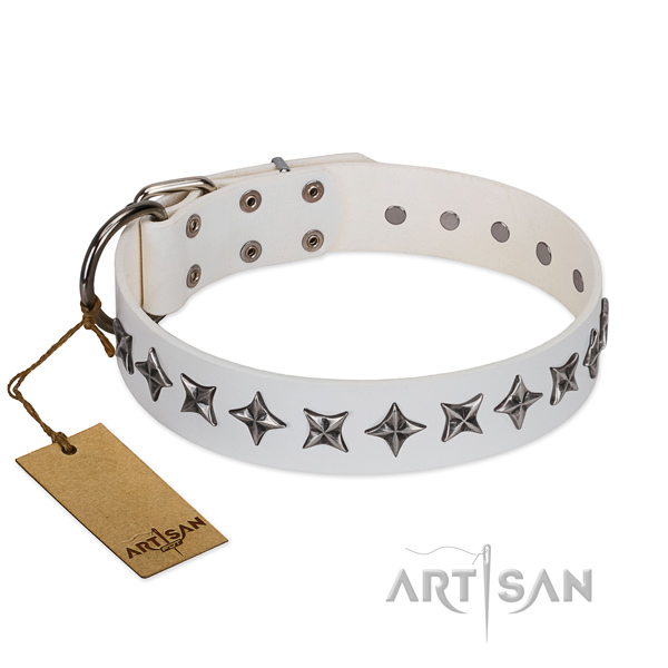 Everyday walking dog collar of fine quality natural leather with decorations
