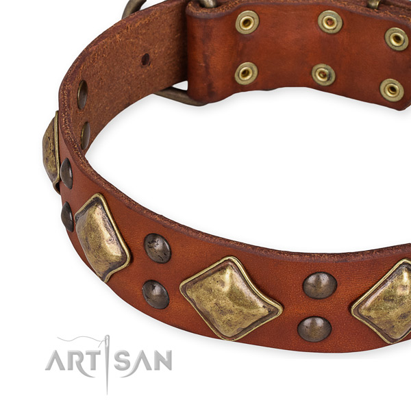 Leather collar with reliable traditional buckle for your stylish canine