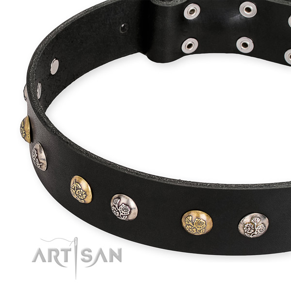 Leather dog collar with incredible corrosion resistant studs