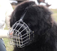 Newfoundland Wire Basket dog muzzle