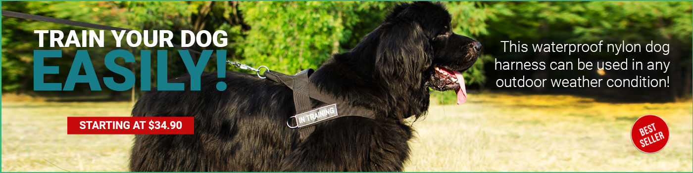 Universal Nylon Newfoundland Harness with ID Patches